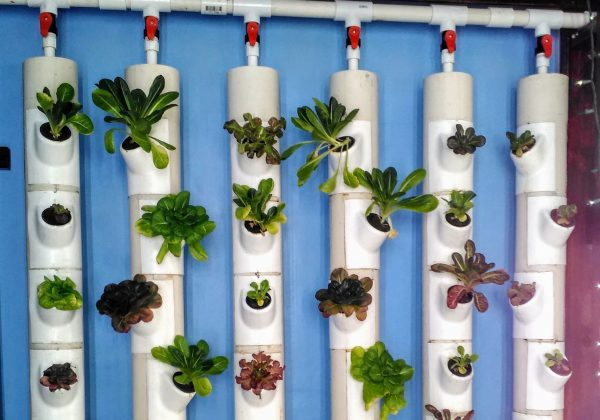 GCF grant supports Tom's Learning Garden in Bingen